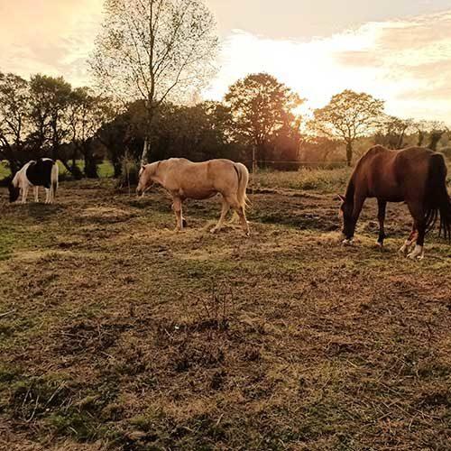 los-caballos